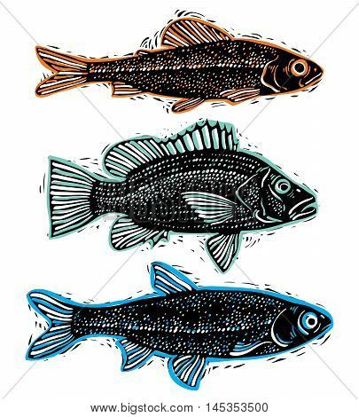 Set of vector drawn fishes different underwater species. Organic seafood graphic symbols collection freshwater fishes sea bass sea bream and salmon.