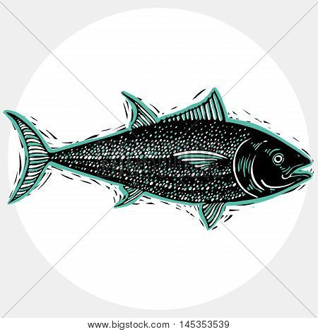 Vector drawing of freshwater fish with fins underwater life illustration. Organic seafood graphic symbol isolated on white.