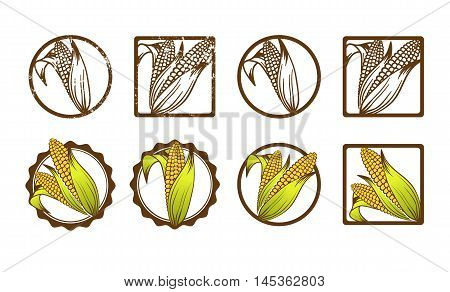 Different Corn Icon Collection Over White Background