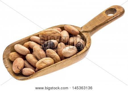 raw cacao beans on a rustic wooden scoop, isolated on white