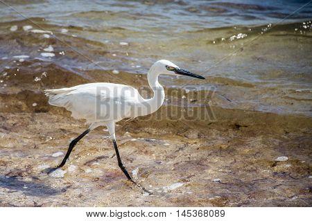 Mexican heron bird at the beach del carmen in yucatan 2