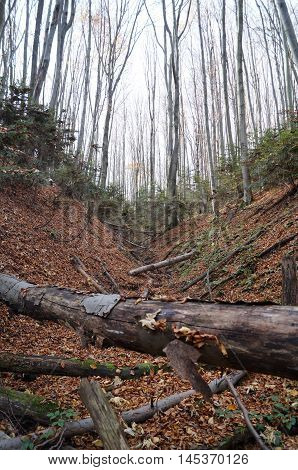 Ravine in the autumn forest with fallen trees and yellow leaves on the ground