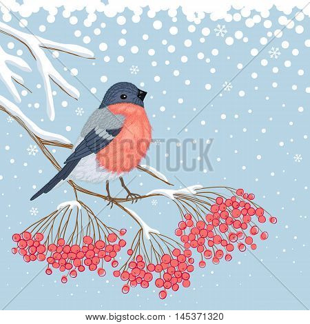 Winter blue snowy card with beautiful bright Bullfinch on the branch of red rowan and empty place for your text