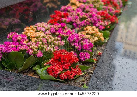 Colored flowers on the flowerbed in city rainy day