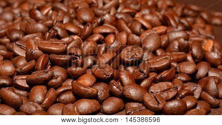 Macro Coffee Beans Closeup