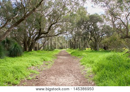 Peaceful path through a Bibra Lake nature reserve with lush overhanging greenery under a blue sky with clouds in Western Australia.