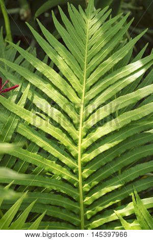 green tropical leaf with sun glare; focus on central part
