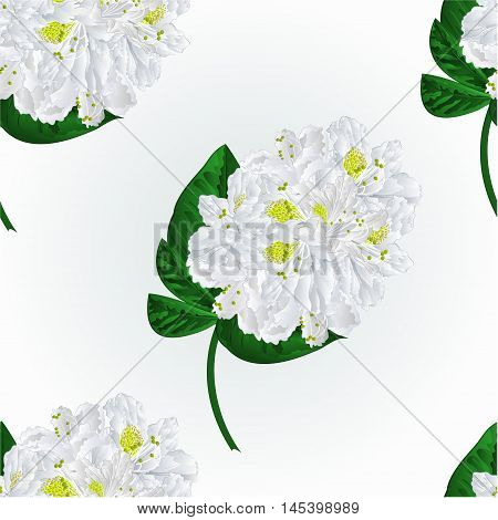 Seamless texture white rhododendron twig in bloom mountain shrub vector illustration