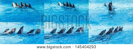 Four dolphins and the Beluga whales dancing in the water Lambada. Set of photos.