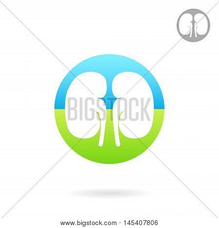 Kidney medical icon 2d vector logo on white background eps 10