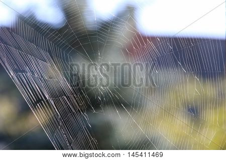 The spider web cobweb in the morning light