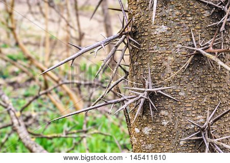Tropical Tree With Sharp Spikes