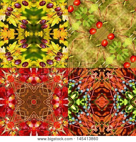 Natural seamless autumn patterns with wild berries, leaves and rose hips. Set of four  natural kaleidoscopic red, yellow, green and brown patterns with autumn fruits