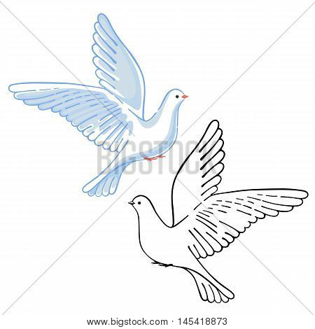 Soaring dove (colored & black) vector illustration isolated on white background