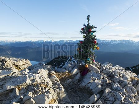 artifical christmas tree on the herzogstand in winter
