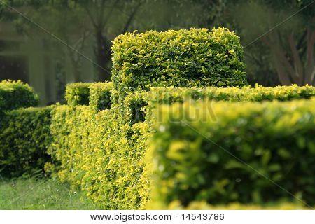Green Ornamental Foliage