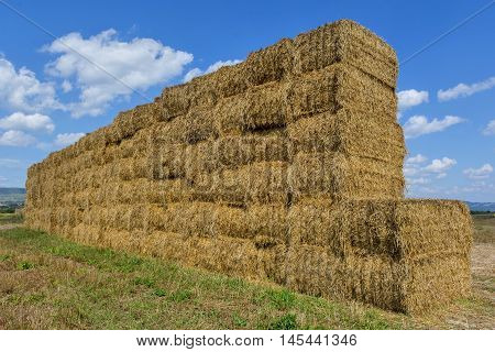 Straw or hay stacked in a field after harvesting