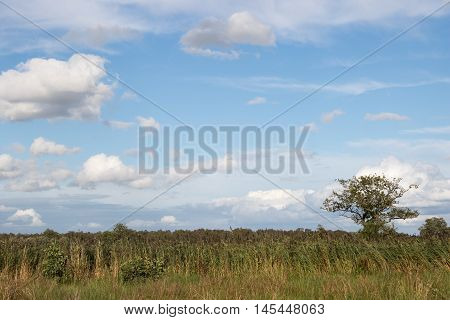 Polder landscape with canals, reeds and trees in The Netherlands