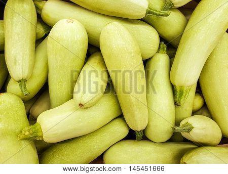 Background of fresh squash. Background of fresh vegetables