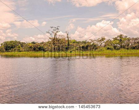 Typical Dense Vegetation On Amazonian Rainforest Cuyabeno Wildlife Reserve Ecuador