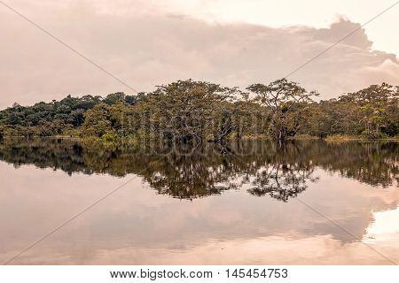 Bushes Reflecting On The River In Flooded Amazonian Jungle Cuyabeno Wildlife Reserve Ecuador