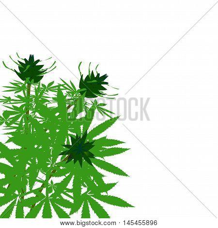 green bush of hemp vector illustration solated.