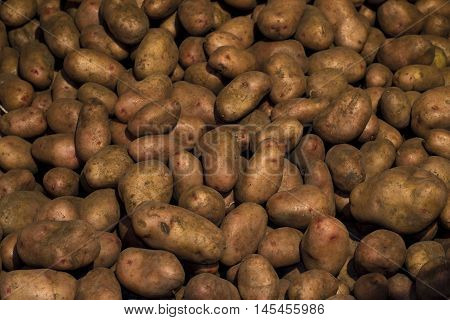 Many Of Potatoes In One Heap. Harvest Potatoes.