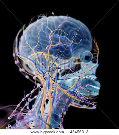 Brain, arteries, nerves, lymph nodes. Human anatomy. 3D illustration.