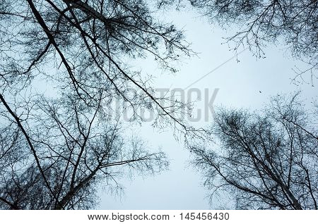 Leafless Bare Trees Over Sky Background