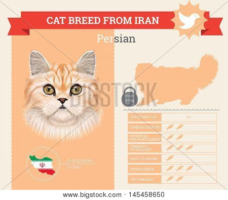 Persian Cat breed vector infographics. This cat breed from Iran