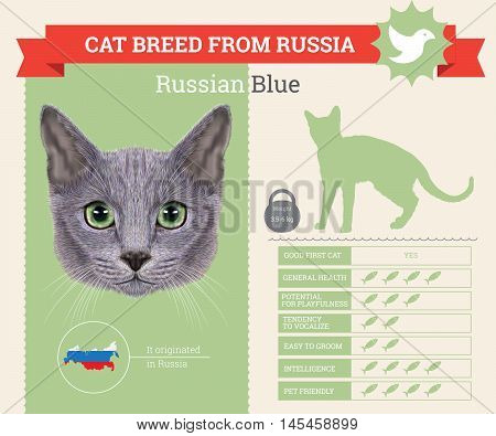 Russian Blue Cat breed vector infographics. This cat breed from Russia