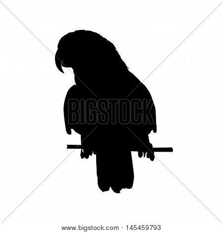 vector illustration of black parrot silhouette. Vector parrot silhouette