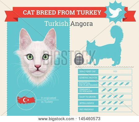 Turkish Angora Cat breed vector infographics. This cat breed from Turkey
