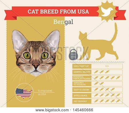 Bengal Cat breed vector infographics. This cat breed from USA