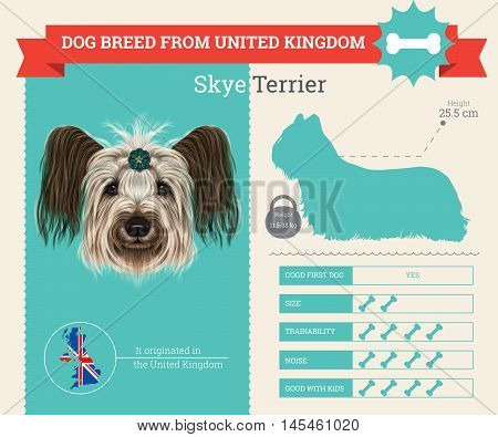 Skye Terrier dog breed vector infographics. This dog breed from United Kingdom