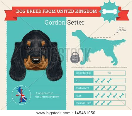 Gordon Setter dog breed vector infographics. This dog breed from United Kingdom