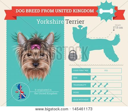 Yorkshire Terrier dog breed vector infographics. This dog breed from United Kingdom