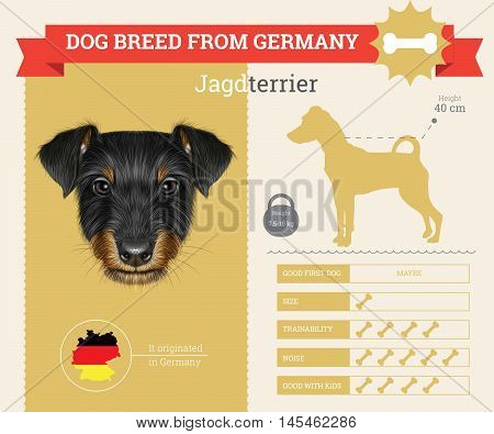 Jagdterrier dog breed vector infographics. This dog breed from German