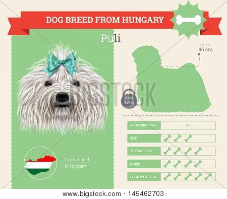 Puli dog breed vector infographics. This dog breed from Hungary