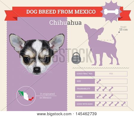 Chihuahua dog breed vector infographics. This dog breed from Mexico