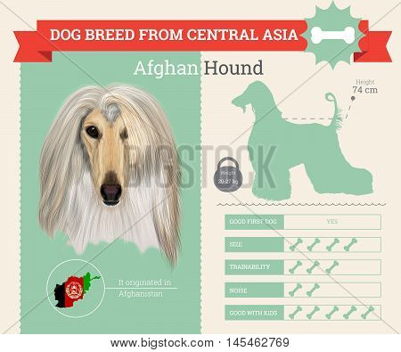 Afghan Hound dog breed vector infographics. This dog breed from Central Asia