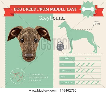 Greyhound dog breed vector infographics. This dog breed from Middle East