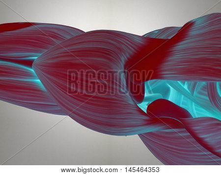 Human anatomy. Shoulder muscles, deltoid, top view. 3d illustration.
