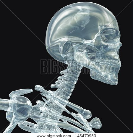 Human skeleton see-through transparent isolated on plain background. 3D Illustration.