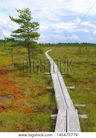 Duckboards at Torronsuo National Park Finland. Typical bog.