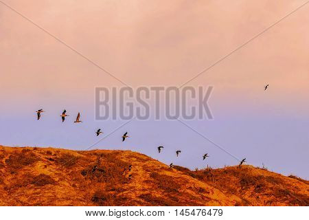 The Silhouette Of A Large Flock Of Pelicans Fly Over Pacific Ocean Galapagos Island Ecuador