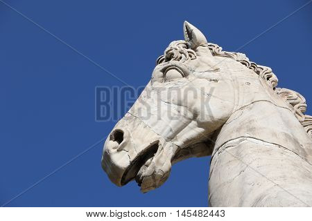 Horse of the Castor statue at the entrance of the Capitoline Hill in Rome