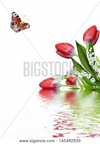 spring flowers tulips isolated on white background. snowdrop. butterfly