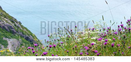 Wildflowers grow in fields on steep slopes near high cliffs on Signal Hill on a Summer day.   Cloud and light over Newfoundland coastline cliffs, St John's, Canada.