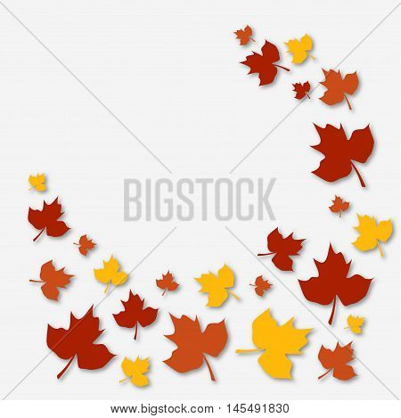 autumn shedding leaves fall maples fallen leaves